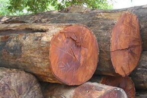 срез дерева мербау